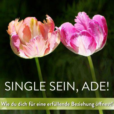 Single ade_ Quadratisch_Wie
